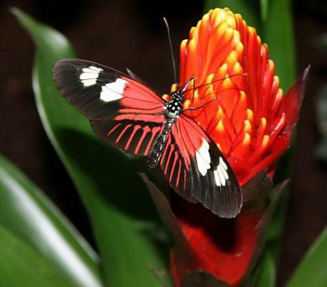 sommerfuglparken-pa-forus-039.jpg