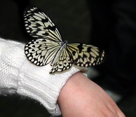 sommerfuglparken-pa-forus-059.jpg