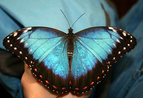 sommerfuglparken-pa-forus-063.jpg