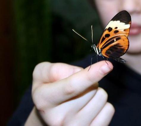 sommerfuglparken-pa-forus-072.jpg