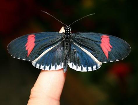 sommerfuglparken-pa-forus-079.jpg
