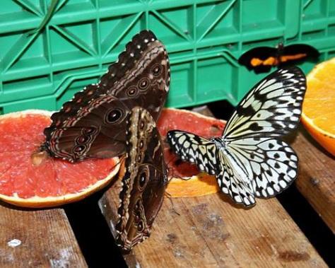 sommerfuglparken-pa-forus-084.jpg