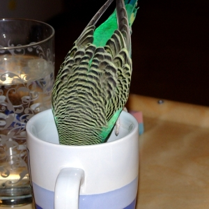 Mmm, te! Men ikke så god som den engelskmannen drikker...