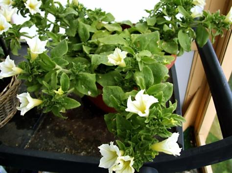 Blomster 003