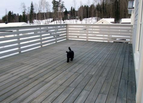 Med litt hjelp fikk vi verandaen tømt for snø. Teemo var fornøyd med den nye lekeplassen!