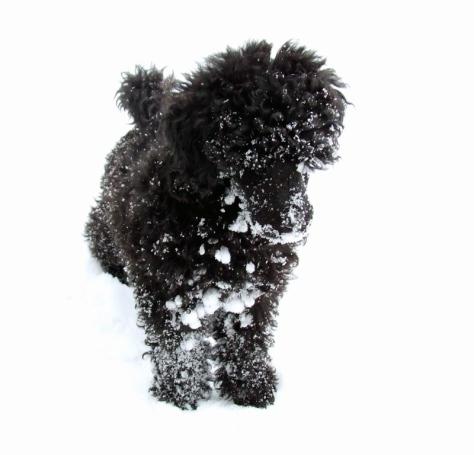 Vi har hatt mye snø på Hedmarken.