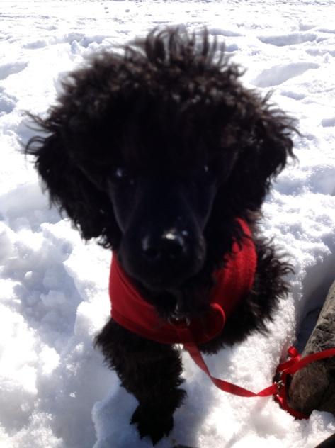 Teemo liker godt å være på tur, selv om det blir litt kaldt på tærne. :)