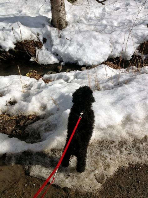 Snøen begynner å smelte, og Teemo oppdager en klukkende vårbekk.