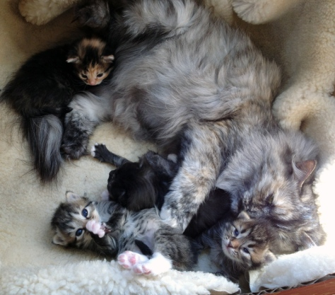 Nytt besøk hos kattungene. :)