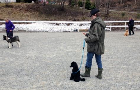 Vi begynte på hundekurs - her øver Teemo og Tenåringen på *sitt* og *bli*.