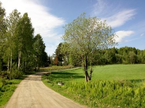 Grønt og fint langsmed turveien vår. Det begynner å minne om sommer!