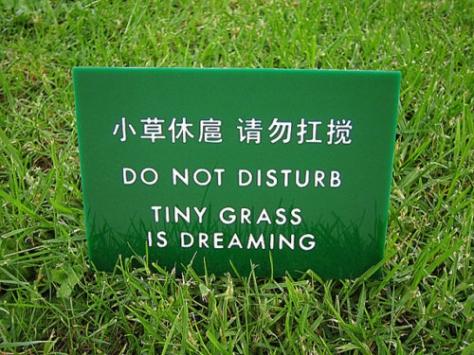 a-tinygrassisdreaming
