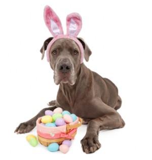 God påske! med vennlig hilsen denne påskehunden som gjerne vil gi deg et egg.